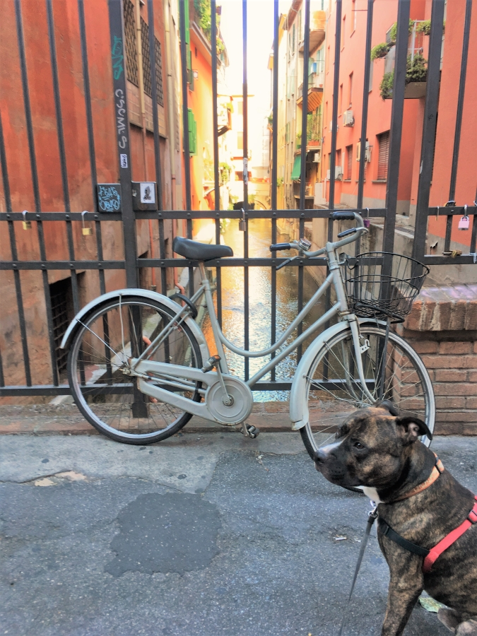 bologna canal dog bicycle