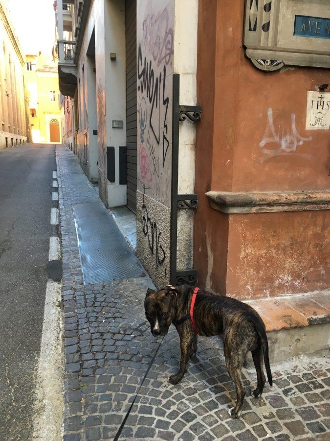 waiting dog bologna