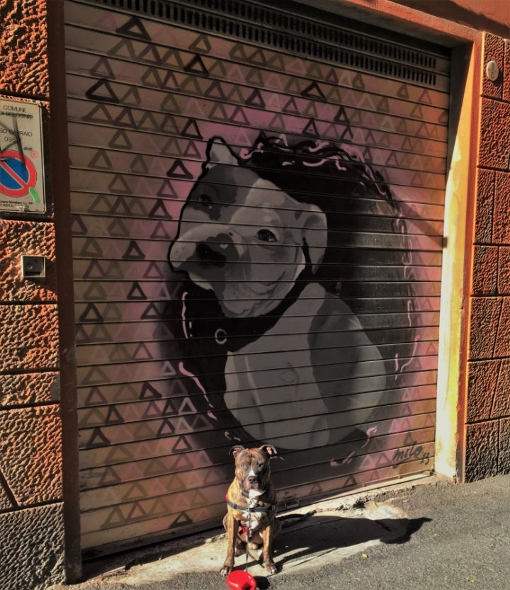 street art Charlie staffy staffy art shutter painting dog in art pitbull bologna